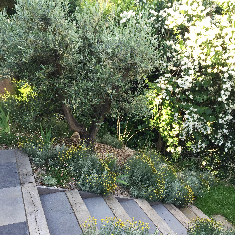Jardin L. – Caluire et Cuire – Atlas Paysages - Architecte Paysagiste Lyon