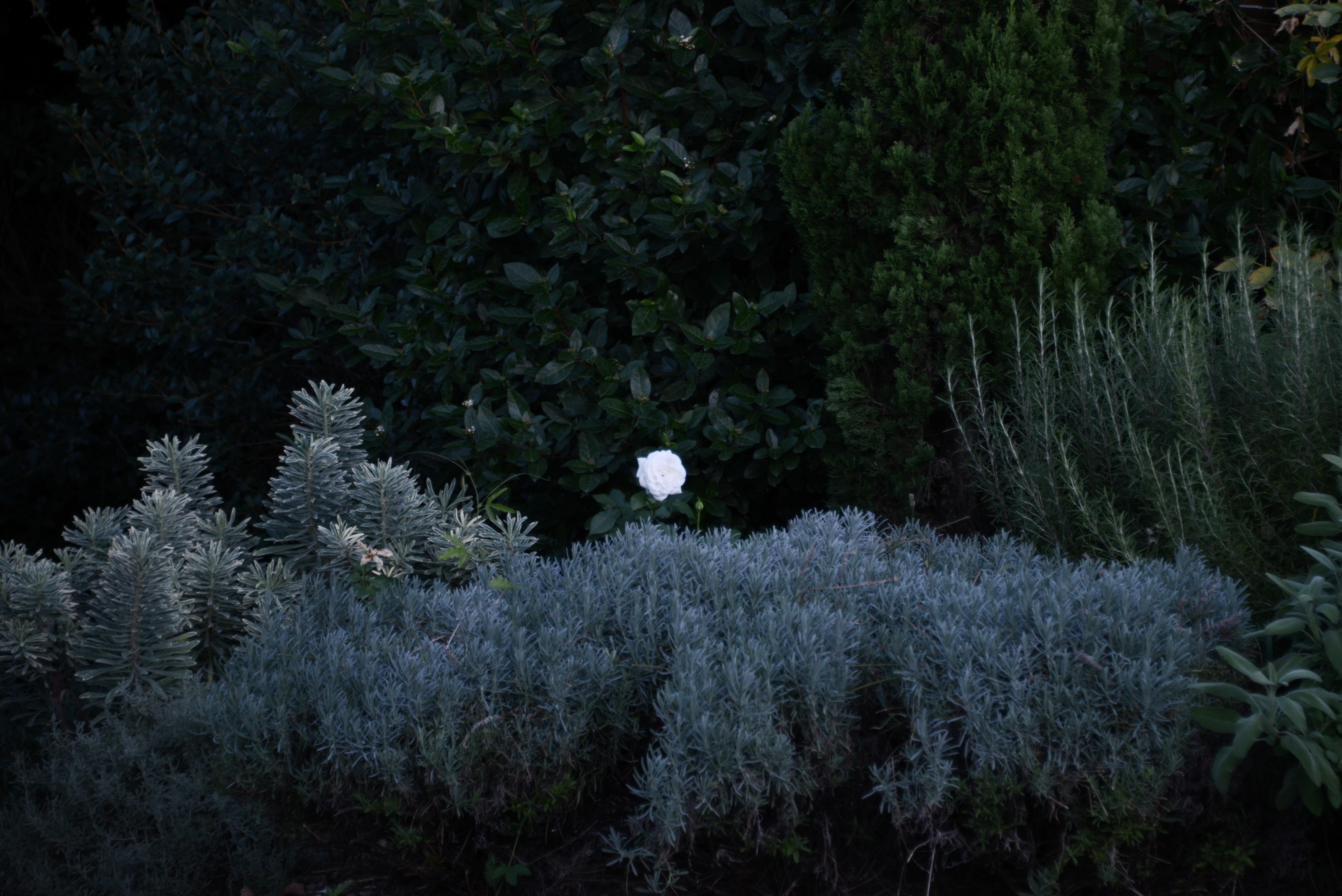JBL_9930 Atlas paysages - architecte paysagiste Lyon - jardin france