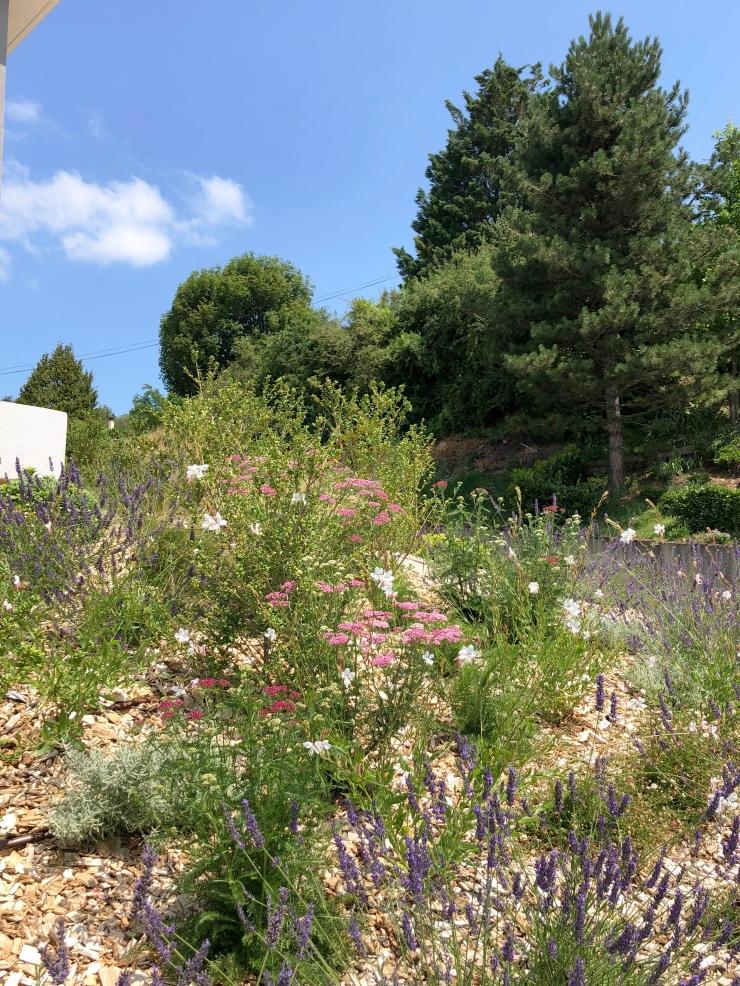 IMG_7378-072019MAS- Jean-Baptiste laine - Atlas paysages - Architecte paysagiste Lyon jardin